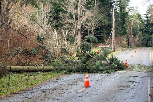 Overhead cables damaged by falling trees