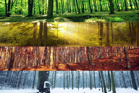 Woodland in the four seasons